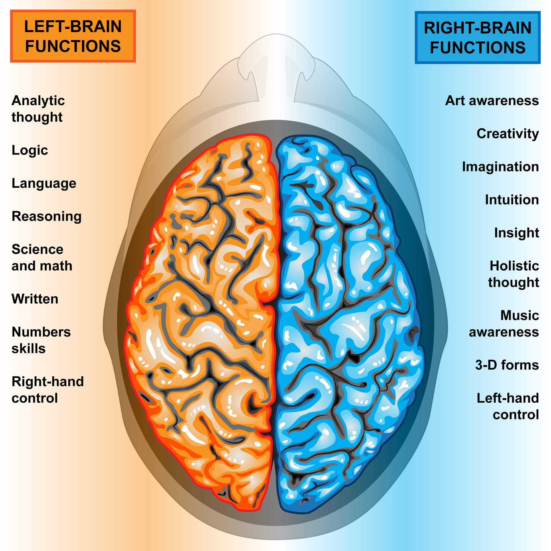 Human Brain Left And Right Functions Space Coach